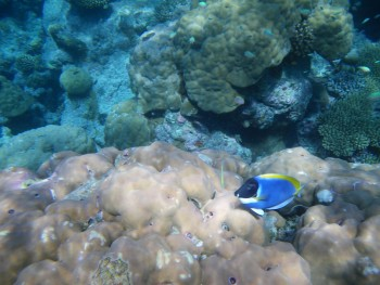 Snorkeling dans notre atoll, Maldives