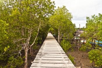 Mangrove Koh Lanta Thailande
