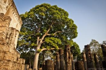 Temple Wat Si Chum Sukhothai Thailande
