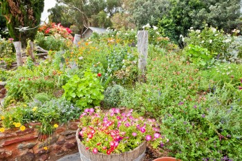 Jardin du domaine viticole Coriole, McLaren Vale