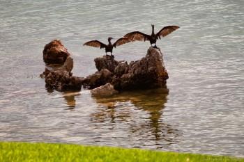 Cormorans, Streaky Bay