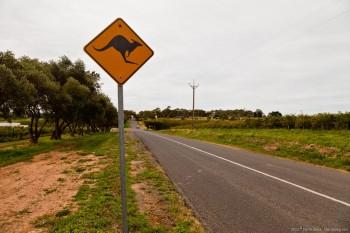 Kangourous, McLaren Vale