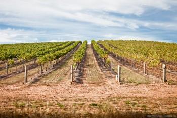 Vignes, Barossa Valley