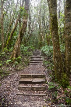 Chemin de randonnée de Springbook National Park