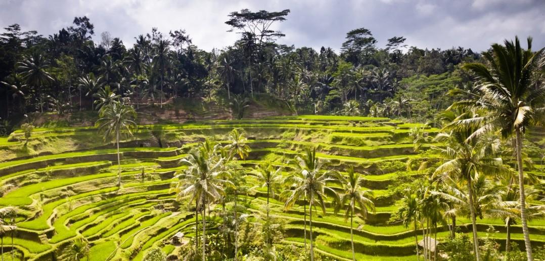 Rizières en terrasse Bali Indonesie