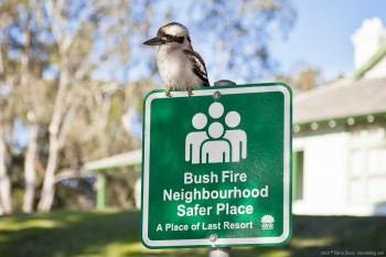 Kookaburra Sydney NSW Australie