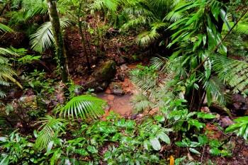 Wet Tropics Daintree National Park Queensland Australie