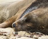 Les Catlins, un paradis pour la faune marine