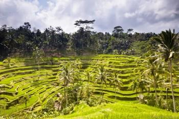 Rizieres terasse Bali Indonesie