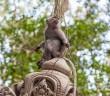 Singe Ubud Bali Indonesie