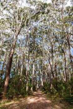 Trees, Booderee National Park