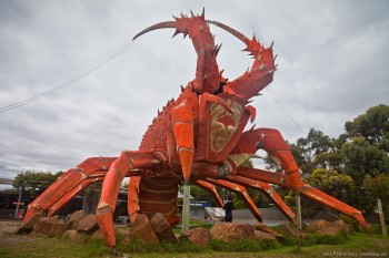 Larry le homard, Kingston SE