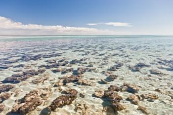 Stromatolites, Hamelin Pool