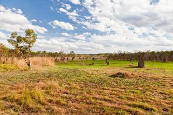 Champs de termitières, Litchfield National Park