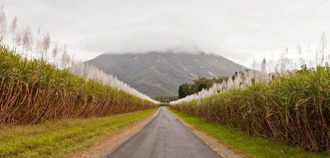 Champs canne a sucre Wet Tropics Queensland Australie