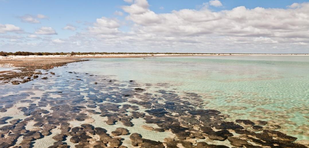 Stromatolites Hamelin Pool WA Australie